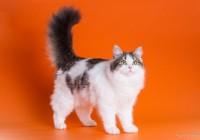 Ako pomôcť mačke s častým výskytom chumáčov chlpov v tráviacom trakte?