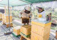 Bratislava sa môže pochváliť prvým včelím hotelom
